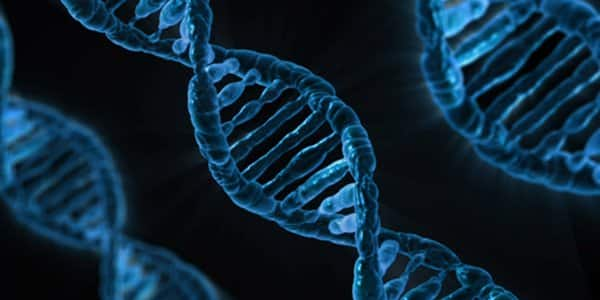 It is DNA, but 'knot' as we know it